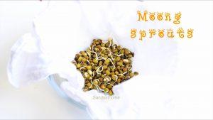 green gram sprouts recipe